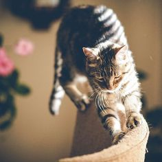 Reposting @furball_fashion: Who loves stretching after  a long lazy day? Tag you busy buddies who needs stretching today 😸😽 😻 Double tap and follow for more os this 👍👍👍