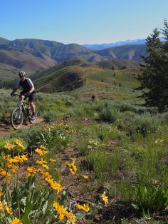 Greenhorn Gulch Mountain Bike Trail in Ketchum, Idaho || SINGLETRACKS.COM
