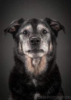 """Who Says Elderly Dogs Aren't as Cute as Pups? 