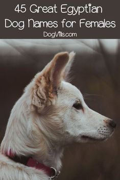 90 Beautiful Egyptian Dog Names for Male & Female Pups - DogVills Female Dog Names, Pet Names, Puppy Names, Baby Names, Beautiful Pictures With Quotes, Egyptian Names, Prince Of Egypt, Beautiful Dogs, Egypt