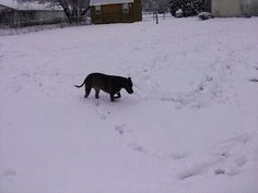 Shasta trying to find snowball I threw