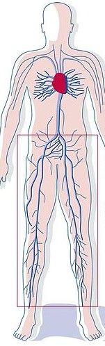 The Dangers Of Deep Vein Thrombosis (DVT).