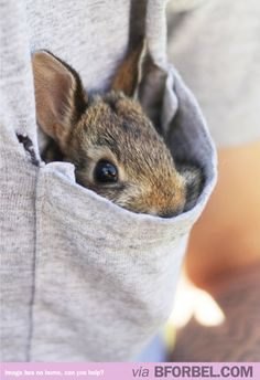 Pocket bunny! It's so fluffy I could die!