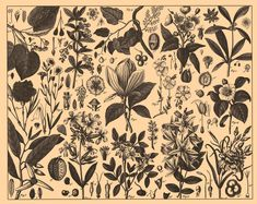 Botanical illustrations from the Brockhaus and Efron Encyclopedic Dictionary, published in Russia,1890-1907.