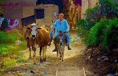 Egypt's natural beauty