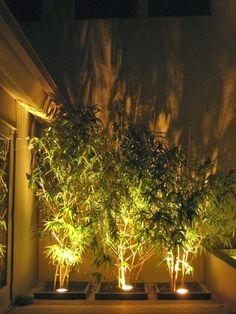Backyard lighting!