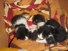 Fresh kitties:-) Christa Mavropoulou - Google+
