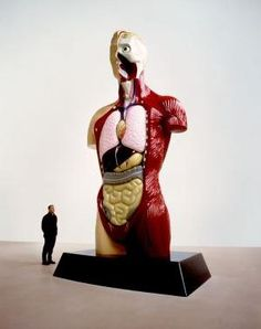 Damien Hirst #anatomy - Carefully selected by GORGONIA www.gorgonia.it