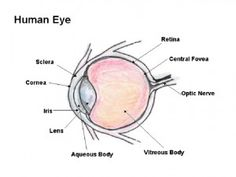 names of human body parts of the eye