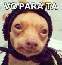 Phteven aka Tuna just makes me sooo happy. 100 Memes, Best Memes, Funny Memes, Hilarious, Meme Rindo, Animal Memes, Funny Animals, Cute Animals, Animal Pics