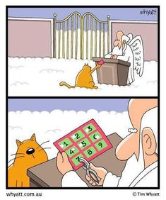 What happens when a cat turns up to Heaven