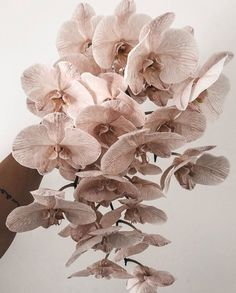 #sydneybride #sydneywedding #sydneyflorist #sydney #flowers #weddingdress #aussiewedding #florist Morning Inspiration, Sydney Wedding, Wedding Vendors, Bouquet, Sparkle, Bear, Bride, Wedding Dresses, Floral