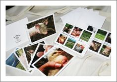 Great Stocking Stuffer: Notecards by Rachel Salatin, Polyface Farm, Swoope VA