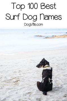 If you're on the search for the best surf dog names for your beach-loving pup I've got you covered! Check out the top 100 ideas for male & female pups! Puppies Names Female, Female Dog Names, Puppy Names, Pet Names, Dog Training Videos, Best Dog Training, Hawaiian Names, Girl Dog Names, English Dogs