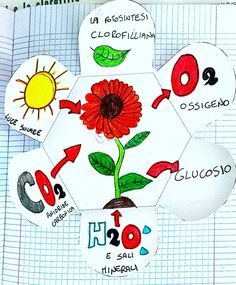 Photosynthesis, Science Classroom, Primary School, Activities For Kids, Projects To Try, Teaching, Natural, Literacy Activities, Geography