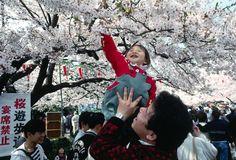 #Giappone #Hanami #Sakura