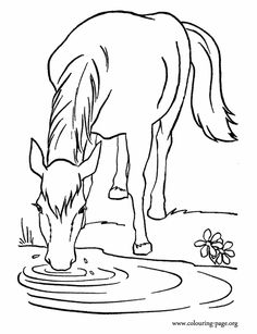 A Farm Horse Drinking Water In The Lake Coloring Page