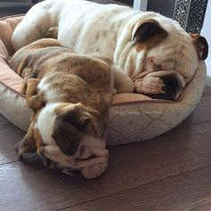 Baggy Bulldogs – BaggyBulldogs