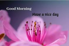 A collection of Beautiful Good Morning Images, beautiful good morning pictures, whatsapp good morning images and quotes. Sweet Good Morning Images, Morning Images In Hindi, Good Morning Picture, Morning Pictures, Happy Birthday Images, Cool Baby Stuff, Funny Quotes, Free, Beautiful