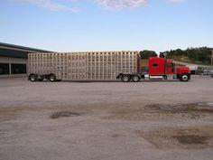 Cool Semi-Trucks | Big Rig Trucks / Semi Trucks / Kruz Cattle Truck.JPG
