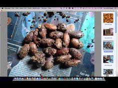 Almonds Germination part 1/2 - YouTube