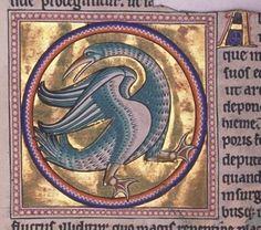 Bestiario de Aberdeen. El más famoso.  8- Folio 54v detalle- Halcyon- © Aberdeen University Library