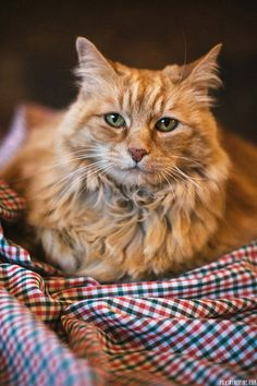 when i can get my own cat, i want to go to the shelter and get the oldest kitty there. that's what this reminds me of :)