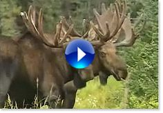 Travel Alaska - Videos of Alaska Friends And Company, Alaska Travel, Cruise, Adventure, Animals, Dreams, Animales, Animaux, Cruises