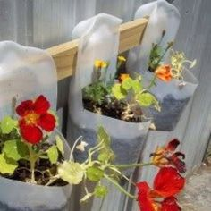 Recycle ideas - milk containers planters