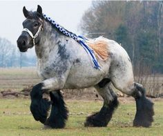 ❥ Awesome Draft Horse