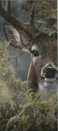 Such gorgeous animals Deer Photos, Deer Pictures, Beautiful Creatures, Animals Beautiful, Animals And Pets, Cute Animals, Deer Art, Woodland Creatures, Forest Animals