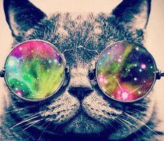 lennons cat  hipster cat