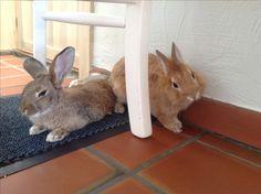 Winny & Redly