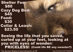 save a dog  http://www.facebook.com/photo.php?fbid=243134415763652&set=a.131945290215899.31633.131817526895342&type=1&theater