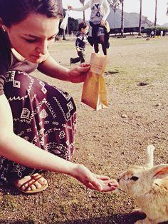 Feeding all the bunnies at bunny island