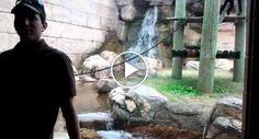 Macaco Traiçoeiro Tenta Atacar Homem