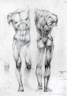 "Курс ""Пластическая анатомия человека"""