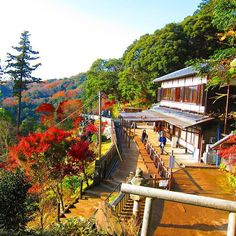 At the end of the garden over a hill stands the Hansobo which is the temple's Shinto shrine. This photo was taken from an entrance to the Tenen Hiking Trail. #japan #travel #autumn #garden #nature