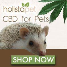 Hedgehog Bath Time Tips & Tricks - Heavenly Hedgies Hedgehog Bath, Oils For Dogs, Organic Superfoods, Bath Time, Pet Shop, Heavenly, Dog Cat, Cute Animals, July 5th