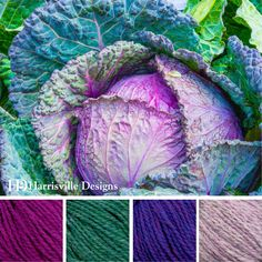 'Cabbage Patch' color palette features SHETLAND yarn in Magenta, Woodsmoke, Violet and Lilac.