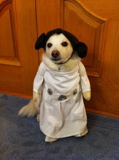 I was laughing so much I was crying! So funny! Funny Costumes, Animal Costumes, Pet Costumes, Halloween Costumes, Princesa Leia, Funny Cats And Dogs, Funny Animals, Cute Animals, Pug