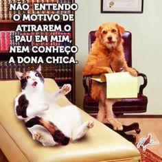 Não entendo o motivo Humor, Animals And Pets, Dogs, It's Funny, Funny Stuff, Top Imagem, Google, Cat Stuff, Funny Things