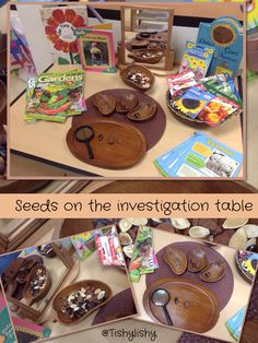 Seeds investigation Science nature nutrition discovery project fine motor sensory fingers and hands Science Area, Plant Science, Science And Nature, Science Table, Science Centers, Investigation Area, Investigations, Spring Activities, Science Activities