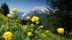 Wildes Deutschland: Die Berchtesgadener Alpen | TV-Tipp auf Arte - Berchtesgadener Land Blog