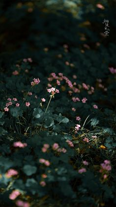 Vintage Flowers Wallpaper, Wallpaper Nature Flowers, Flower Background Wallpaper, Background Pictures, Flower Backgrounds, Flowers Nature, Wallpaper Backgrounds, Beautiful Flowers, Minimal Photography
