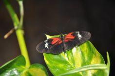 Butterfly House - Vienna Butterfly House, Vienna, My Photos, Plants, Animals, Animales, Animaux, Animal, Plant