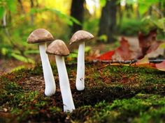 Miniature Mushroom Sculptures, Plant Stakes, Terrarium Accessories, Fairy Garden Accessories. $16.00, via Etsy.