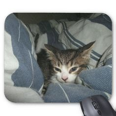 Comfy Kitten Mouse Pads! #cute #young #kitten #mouse #pad #zazzle #store #cat http://www.zazzle.com/conquestkitty*  Can you handle this level of cute?  After viewing this store I exhale pixie dust and everything looks like rainbows.  Or, maybe that's the new medication...  Anyway, have a look.