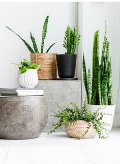 Styling with plants.