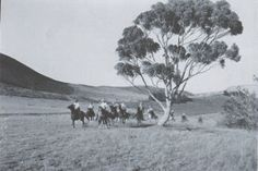 People riding horses in old Palos Verdes circa early 1950's.